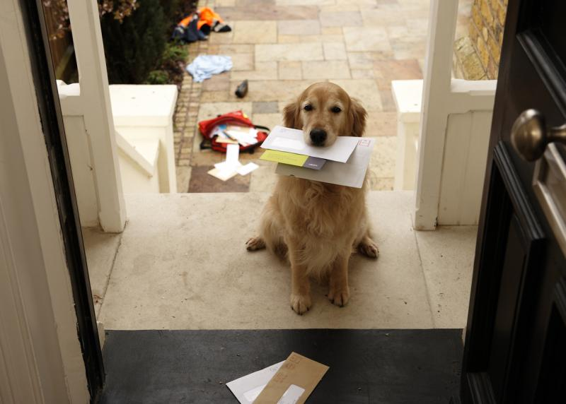 Dog sitting at the front door with the door open and mail in his mouth.
